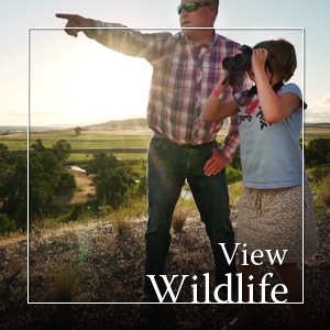 WidgetAdsViewWildlife